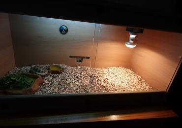 Tortoise with vivarium